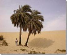 tiere-pflanzen-palme